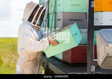 Beekeeper Carrying Honeycomb Crate At Apiary - Stock Image