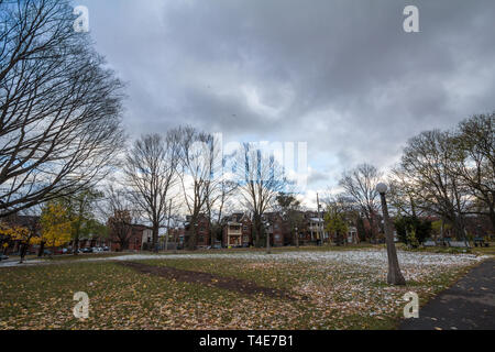 OTTAWA, CANADA - NOVEMBER 10, 2018: Autumn tree with yellow leaves in fall in Dundonald park of Centretown. Centretown is a residential bourough of Ot - Stock Image