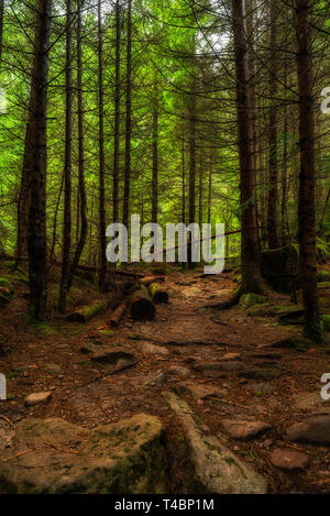Rainy day in Natural green misty forest - Stock Image