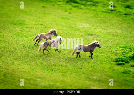 Three horses running on a green field in the spring seen from above - Stock Image