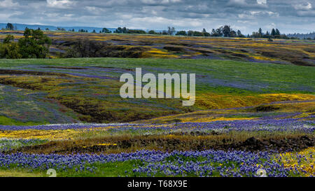 Landscape at North Table Mountain Ecological Preserve, Oroville, California, USA , on a sunny partly cloudy spring day, featuring yellow and purple wi - Stock Image