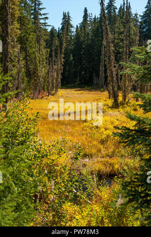 An unnamed creek and its unnamed swamp immediately below the outlet of Hideaway Lake in Oregon's Mt. Hood National Forest, in fall. - Stock Image