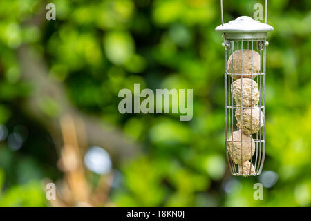 Colour photograph of off-centered suspended bird feeder with fat-balls with green background. - Stock Image