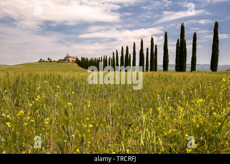 Long row of cypress trees leading to a Tuscan villa near San Quirico d'Orcia - Stock Image