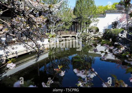 (190423) -- NEW YORK, April 23, 2019 (Xinhua) -- Photo taken on April 23, 2019 shows the spring scenery in the Chinese Scholar's Garden on Staten Island, New York, the United States. (Xinhua/Wang Ying) - Stock Image