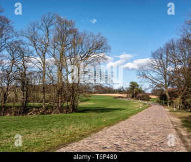 Grassy meadows & bare trees next to Luisenhof cobbled road, Brandenburg, Germany - Stock Image