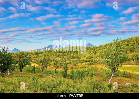 Little lake surrounded by birch trees on island Hinnøya. Troms, northern Norway, Europe. - Stock Image