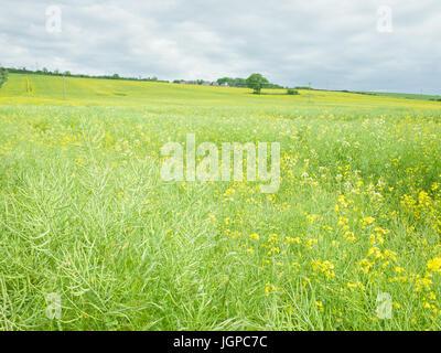 Green Field Meadow English Countryside UK - Stock Image