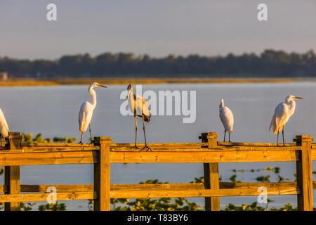 Birds on railings of dock on Lake Pierce at Capernaum Lakeside Lodge also Capernaum Inn Retreat Center in Lake Wales Polk County Floridda in the Unite - Stock Image