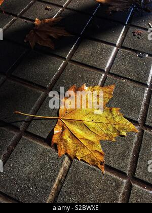 Autumn leaf on a pavement in Barcelona, Caralonia - Stock Image