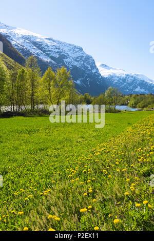 Spring, Valley, Meadow, Road, Romsdal, Norway, Europe - Stock Image