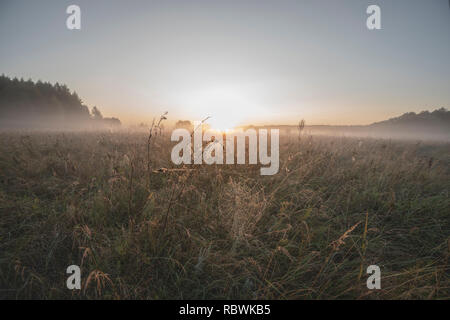 Dawn, morning fog over the meadow - Stock Image