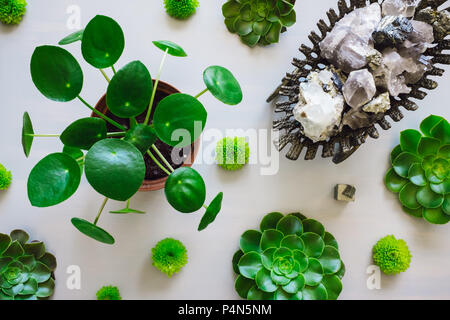 Pilea Plant, Succulents and Chrysanthemums Arranged with Antique Vessel Containing Quarts, Flourite, Black Tourmaline, Pyrite and Mica - Stock Image