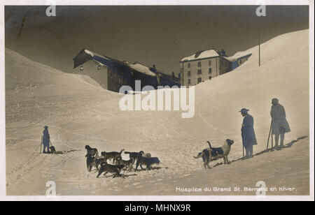 Grand St Bernard Hospice, Switzerland, winter scene with dogs and puppies.      Date: circa 1920s - Stock Image