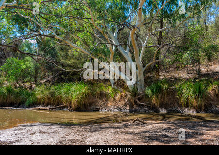 Cooper Creek, near Windorah, OUtback Queensalnd, Australia - Stock Image