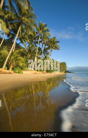 Tropical beach with coconut palms - Stock Image