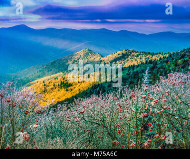 Icced summit trees, Mount MItchell State Park, North Carolina , Blue Ridge Parkway - Stock Image