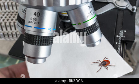 Research of deer tick under microscope in laboratory. Ixodes ricinus. Dangerous parasitic insect. Carrier of infections. Encephalitis and Lyme disease. - Stock Image