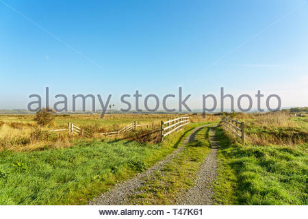 RSPB Bowers marsh reserve near Pitsea, England - Stock Image