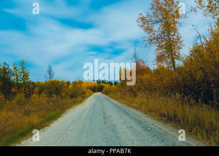 A dirt road passes along a deciduous forest against a blue sky - Stock Image