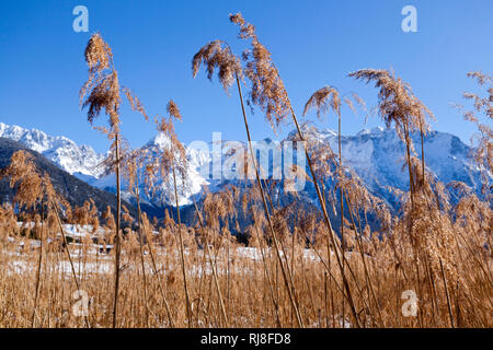 trockenes Schilfrohr am Bergsee - Stock Image