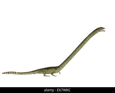 Dinosaurier Tanystropheus longobardicus / dinosaur Tanystropheus longobardicus - Stock Image