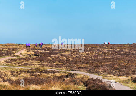 Walkers making their way to the trig point at Hay Bluff, Hay-on-Wye Powys UK. March 2019 - Stock Image