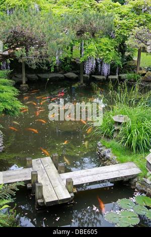 Fish Pond, The Japanese Garden, Cottered, Hertfordshire. - Stock Image