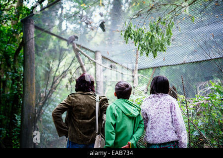 Looking at parrots. - Stock Image