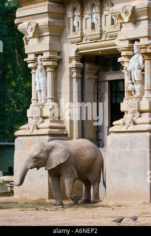Elephant and its housing in Buenos Aires Zoo B - Stock Image