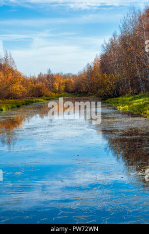 Forest river with shores of wooded hardwoods against a blue sky on an early September after-noon - Stock Image