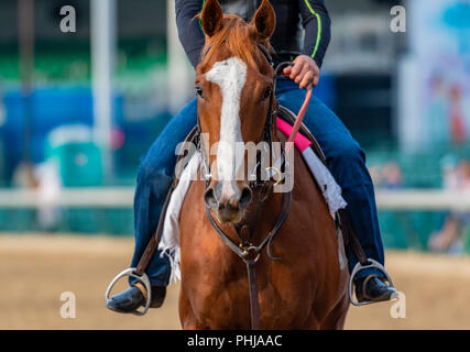 Straight View of Horse Face running on dirt track - Stock Image