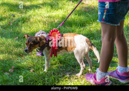 Bournemouth, UK. Sunday 2nd September 2018. A wide variety of dogs take part in the annual Dog Show at the RSPCA Ashley Heath centre near Bournemouth in Dorset. Awards included best condition bitch, waggiest tail, agility and speed test and overall best in show. Credit: Thomas Faull/Alamy Live News - Stock Image