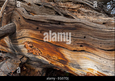 Wood in Winter - Stock Image
