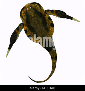 Bothriolepis Fish - Bothriolepis was an aquatic placoderm fish that lived during the Devonian Period in freshwater and near shore marine environments. - Stock Image