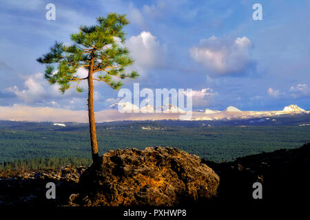 Ponderosa Pine growing in AA lava with Cascade peaks. Newberry National Volcanic Monument, Oregon - Stock Image