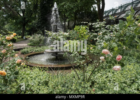 Palmengarten rose garden and water fountain in May, a botanical garden located in Westend-Süd district, Frankfurt am Main, Hesse, Germany. - Stock Image