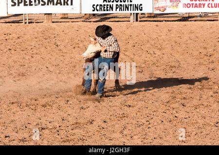 USA, Arizona, Buckeye, Hellzapoppin Arena. Steer wrestling at rodeo. Credit as: Wendy Kaveney / Jaynes Gallery / - Stock Image