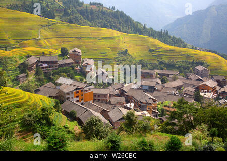 The Longsheng Rice Terraces(Dragon's Backbone) also known as Longji Rice Terraces are located in Longsheng County, about 100 kilometres (62 mi) from G - Stock Image