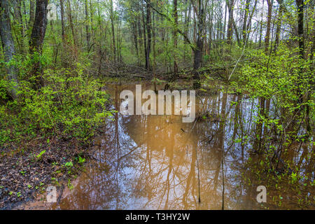 Flooded Stream in Forest - Stock Image