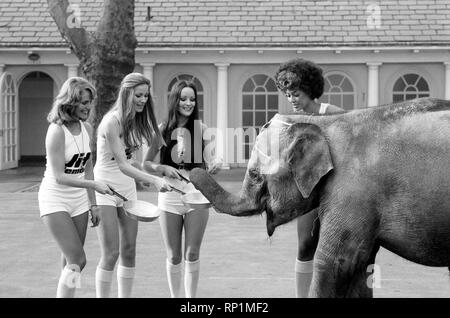 Strange tales of London. Beauty Queens (who will be in the pancake race on Tuesday) and baby elephant Minoti - she is five, but for an elephant that is a baby. February 1975 75-00776-011 - Stock Image