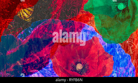 Artistic digital collage of colorful blooms close-up. Psychedelic floral background of beautiful common poppy flowers and wheat field. Surreal effect. - Stock Image