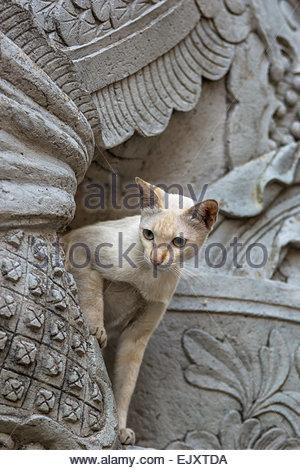 Cat climbing a statue. Wat Pho also called Wat Phra Chettuphon - Temple of the Reclining Buddha - Bangkok - Thailand - Stock Image