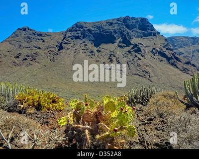 Punta Teno Landscape - Stock Image