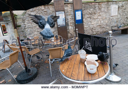 Pigeons eating leftovers on cafe tables - Stock Image