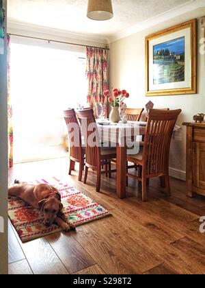 A cosy home interior with a dining room table set for a family meal and a lazy dog sleeping on a rug on a wooden floor - Stock Image