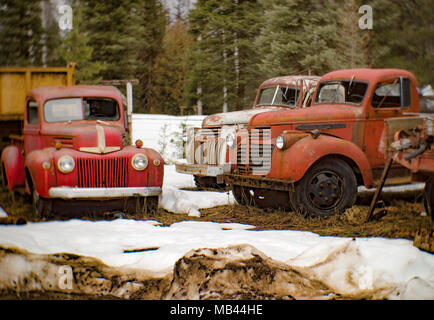 Old 1940s Ford, Chevy, and GMC trucks parked in a wooded area, in Noxon, Montana.  This image was shot with an antique Petzval lens and will show sign - Stock Image