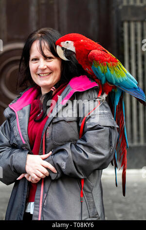 A woman walking about the city centre with a real parrot on her shoulder stops to have her photograph taken in Dundee, UK - Stock Image
