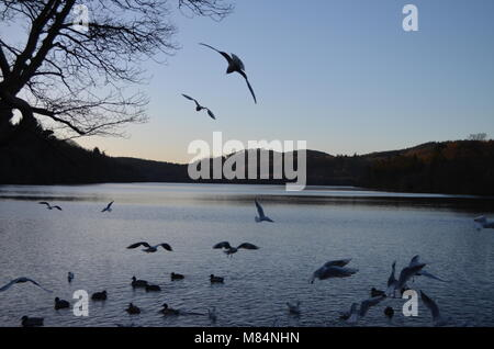 Silhouettes of Birds on Castlewellan Lake - Stock Image