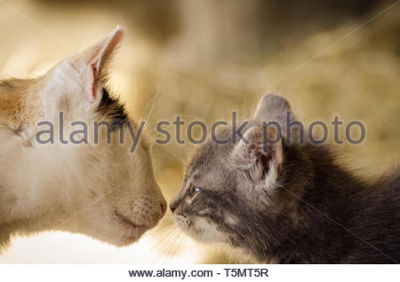 A Cat Baby and his Mum - Stock Image